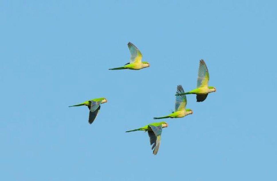 0_colony Of Birds