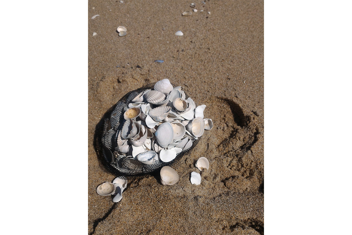 I-Chern Lai, From The Intervention 'I Replaced 386 Shells On The Beach With The Moulds Of My Thumb's Finger Print', The Sea Shell I Replaced By The Moulds Of My Thumb's Finger Print, 2017, The Hague, Netherlands, Photo By Yasunori Kawamatsu
