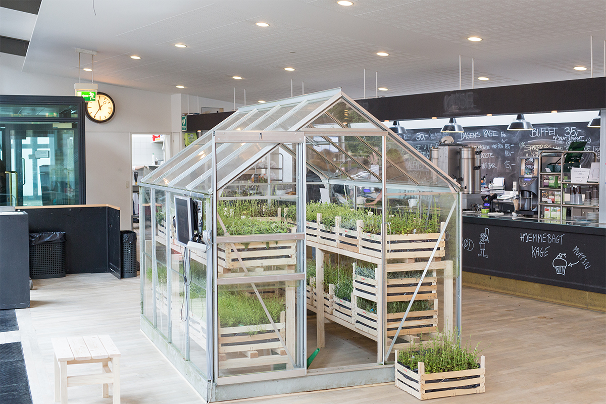 Marie Markman, Old greenhouse filled with edible herbs, 2015, Aarhus School of Architecture. Photo by Thomas Lillevang. Courtesy of the artist.