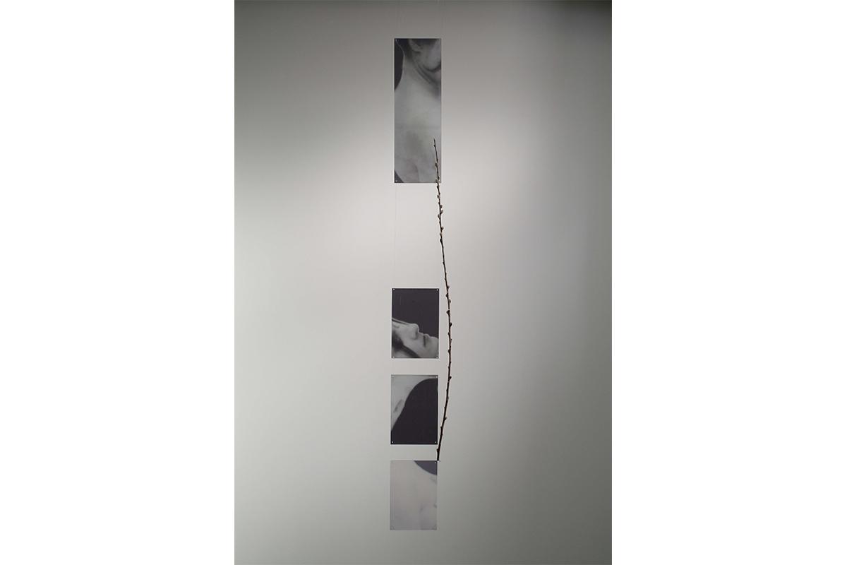 Rachel Grynberg, Pieces, 2009. Photograph, plexiglas, wire. 6 x 60 inches. Photo by Gene Ogami.