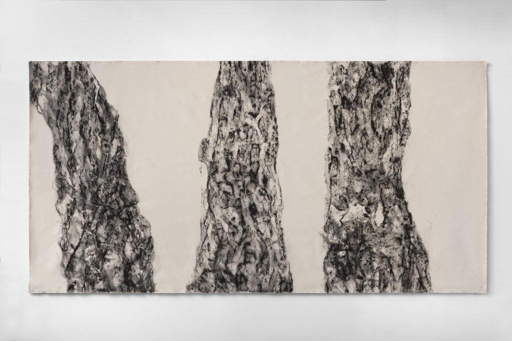 """Joan Wulf, Echoes (Pinus Canariensis), 2020. Handmade charcoal on canvas. 60"""" x 120"""". Photo by Gene Ogami. Courtesy of the artist."""