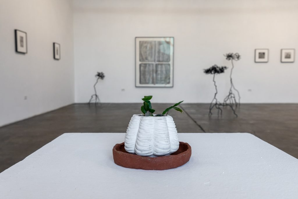 Julie Tolentino, Archive in Dirt Living cactus plant, soil, pot (propagated from a larger plant that originally belonged to Harvey Milk). Installation view at 18th Street Arts Center. Photo by Marc Walker.